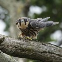 Hobby about to fly