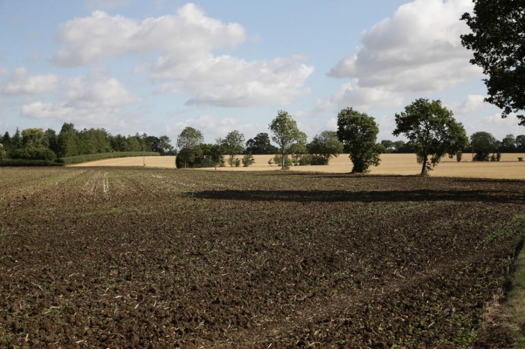 Early August fields in Suffolk