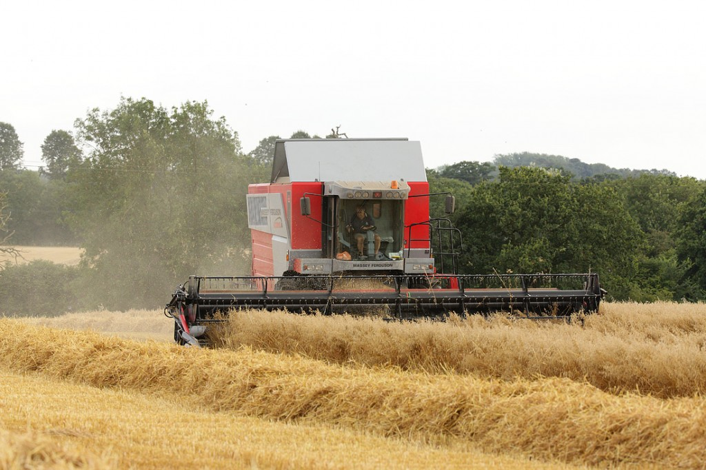 Robert harvesting oats at Halls Farm Norton. August Suffolk
