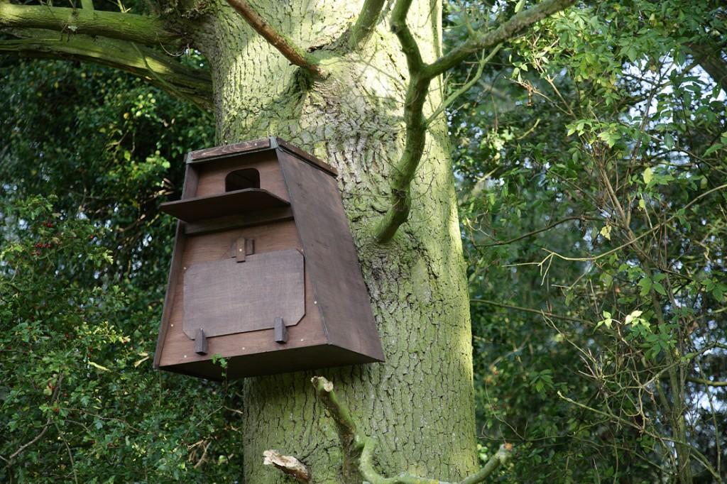 Newly errected Barn owl box