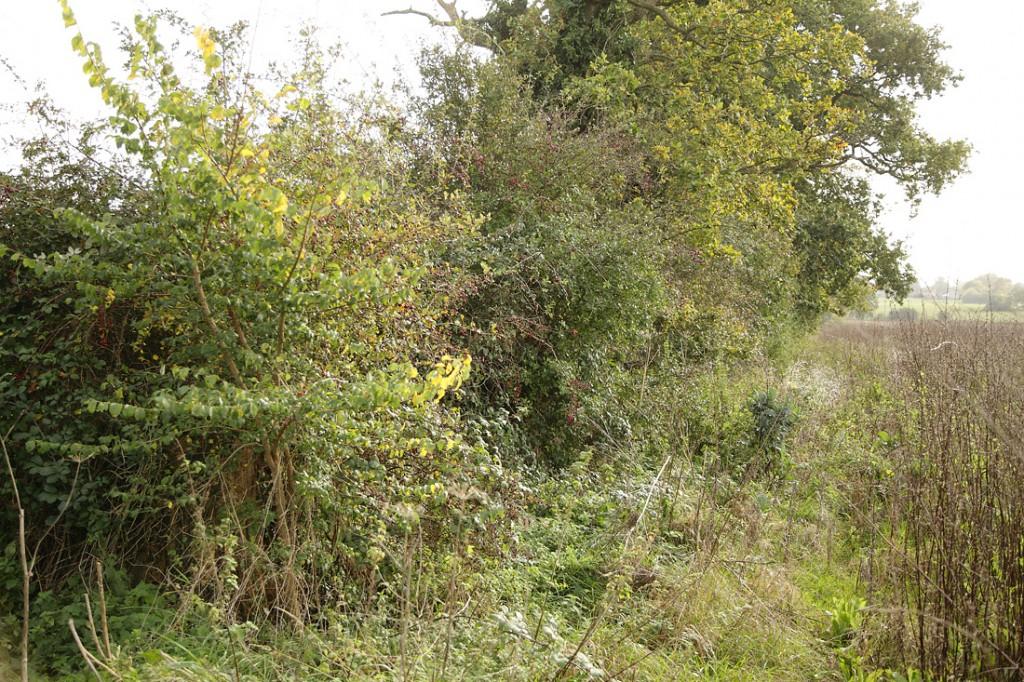 Hedge next to wild bird mix margin, year round wildlife food