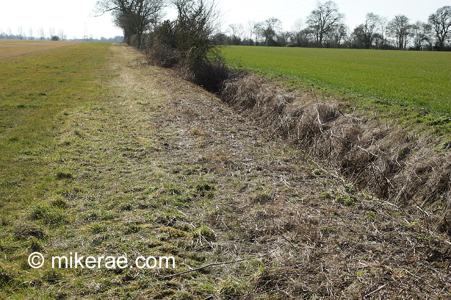 Field margin, new hedge growth and ditch stripped bare. wildlife value destroyed