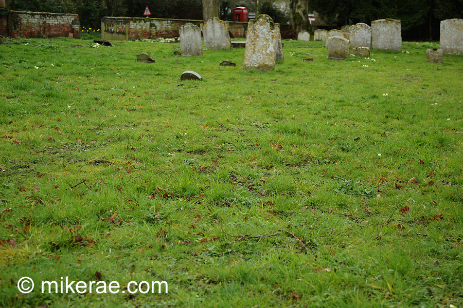 once primrose rich churchyard stripped of wild flowers by over mowing