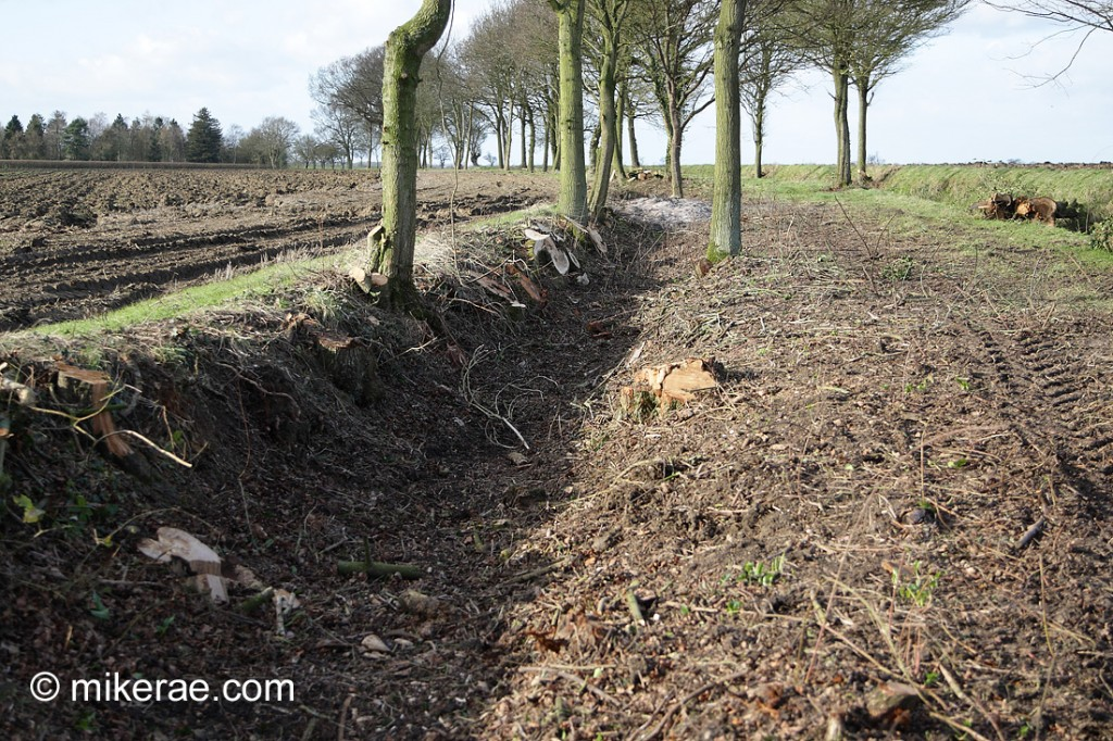 "close up of ""management work"" done to old green land and hedgerow"