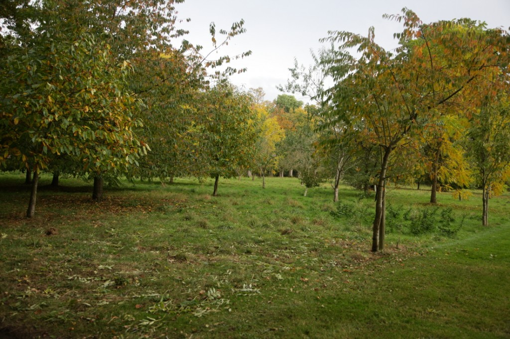 Orchard at Little Haugh farm during bird count