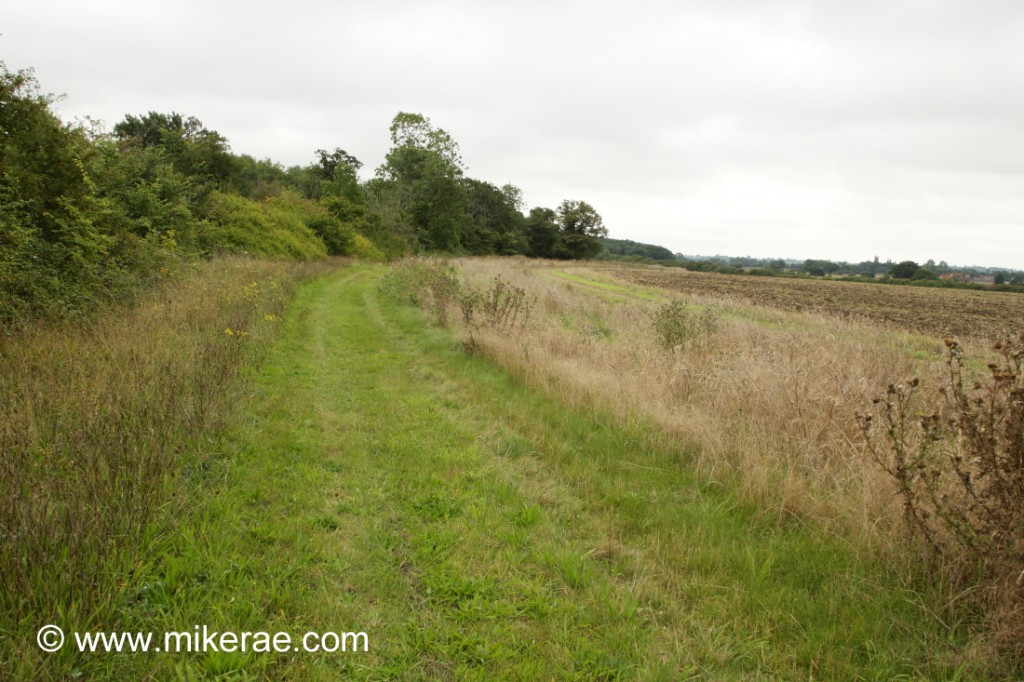 Wide field margin managed for wildlife