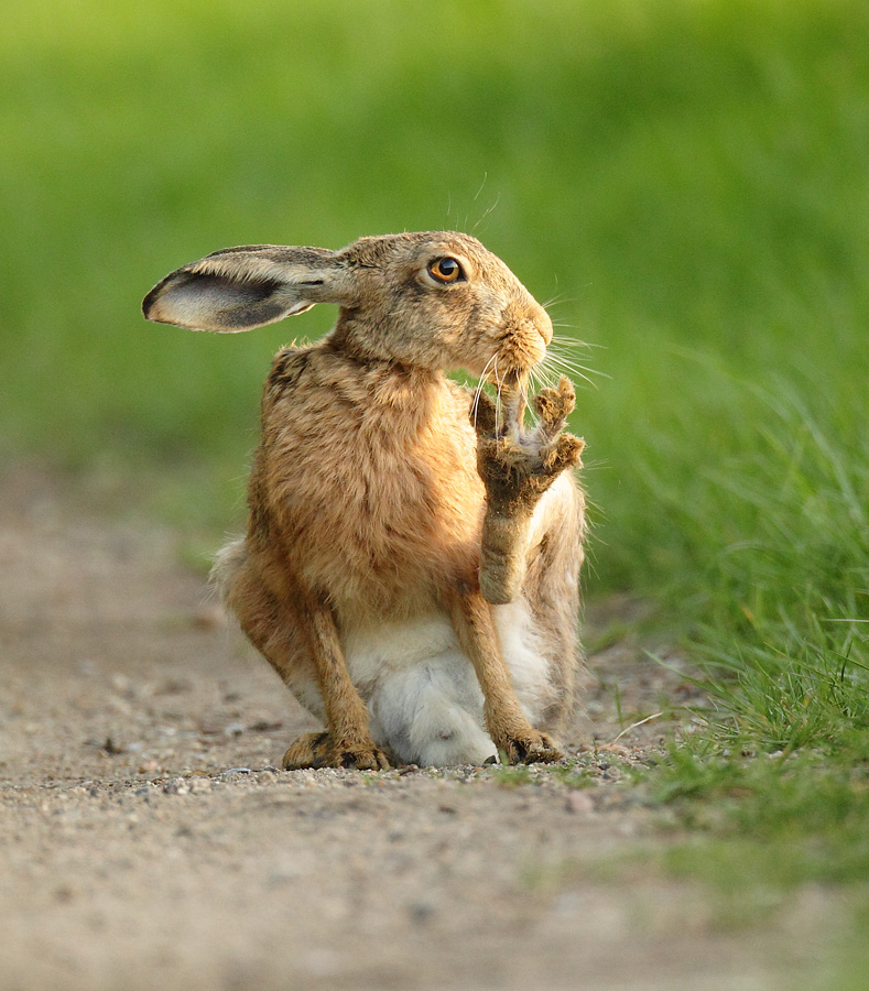 зайцы кролики прикольные картинки формы работников метро